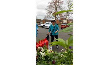 BVGA plant sale - BVGA members selling plants and compost