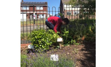 Volunteering in the Village Hall gardens. - James volunteered his time to weed the Help Yourself Herb Garden during spring 2020. In addition James supported the BVGA by creating posters for our plant sales and Garden Store. All helped James achieve his volunteering section of the Bronze Duke of Edinburgh's Award. Well done, James - Photographer Kate Mawer